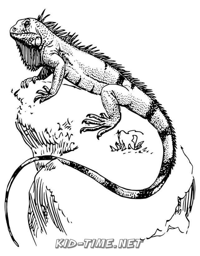 Free Lizard Pictures To Color, Download Free Clip Art, Free Clip ... | 822x642