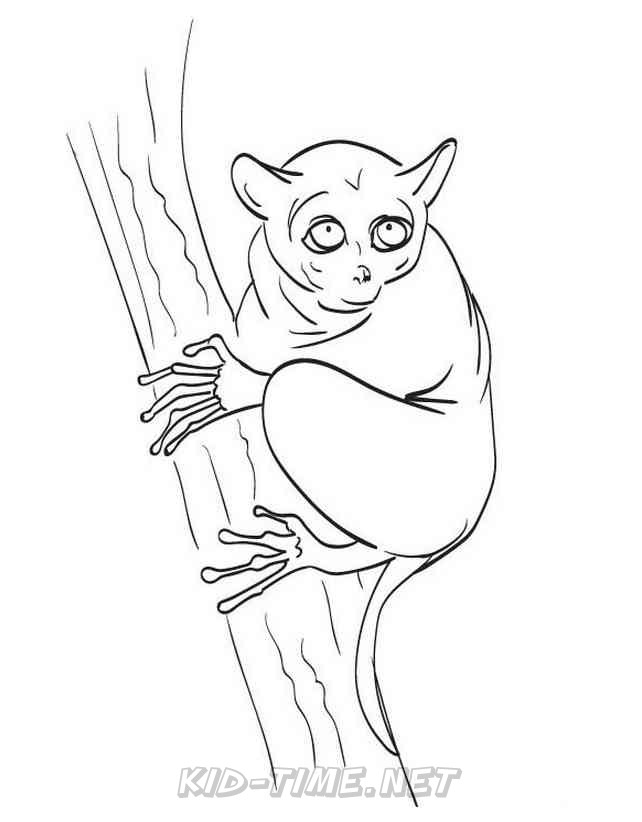 Tarsier Monkey – Animals Coloring Book Pages Sheets – Kids Time Fun Places  To Visit And Free Coloring Book Pages Printables