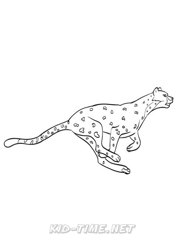 Puma Cougar Animals Coloring Book Pages Sheets Kids Time Fun Places To Visit And Free Coloring Book Pages Printables