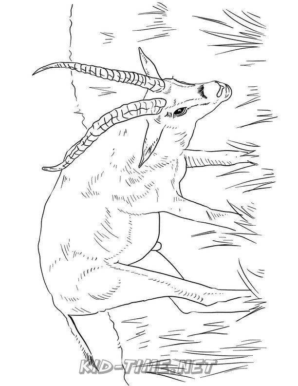gazelle-coloring-pages-012 - Kids Time Fun Places to Visit ...