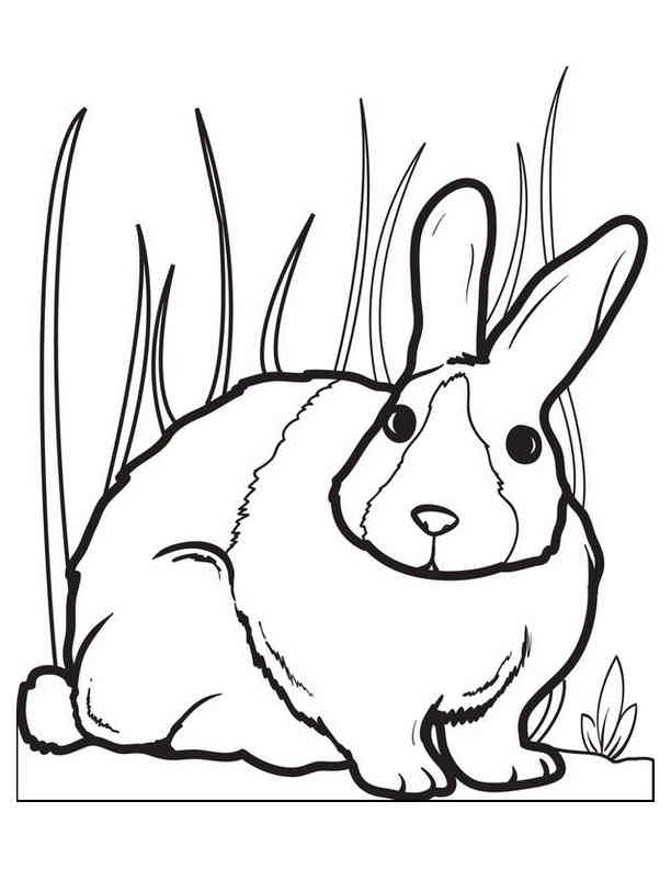 - Rabbit 2 – Bunny Animals Coloring Book Pages Sheets – Kids Time Fun Places  To Visit And Free Coloring Book Pages Printables